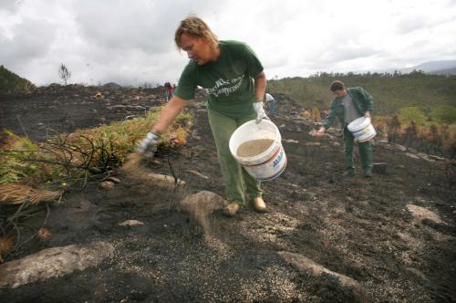 Labores de reforestación nun monte de Chaín. Foto: Ana